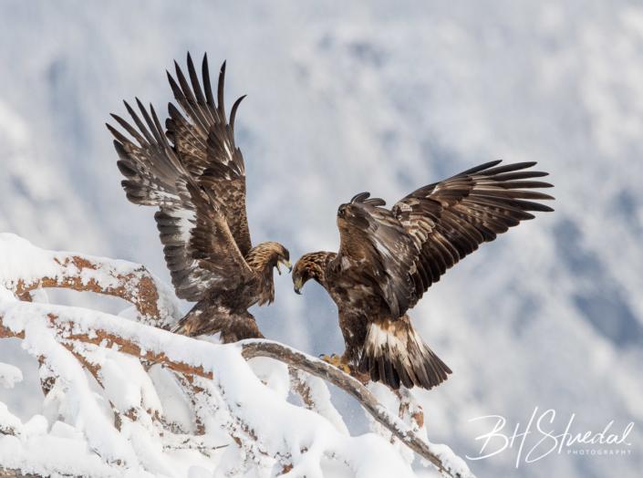 Eagle argument