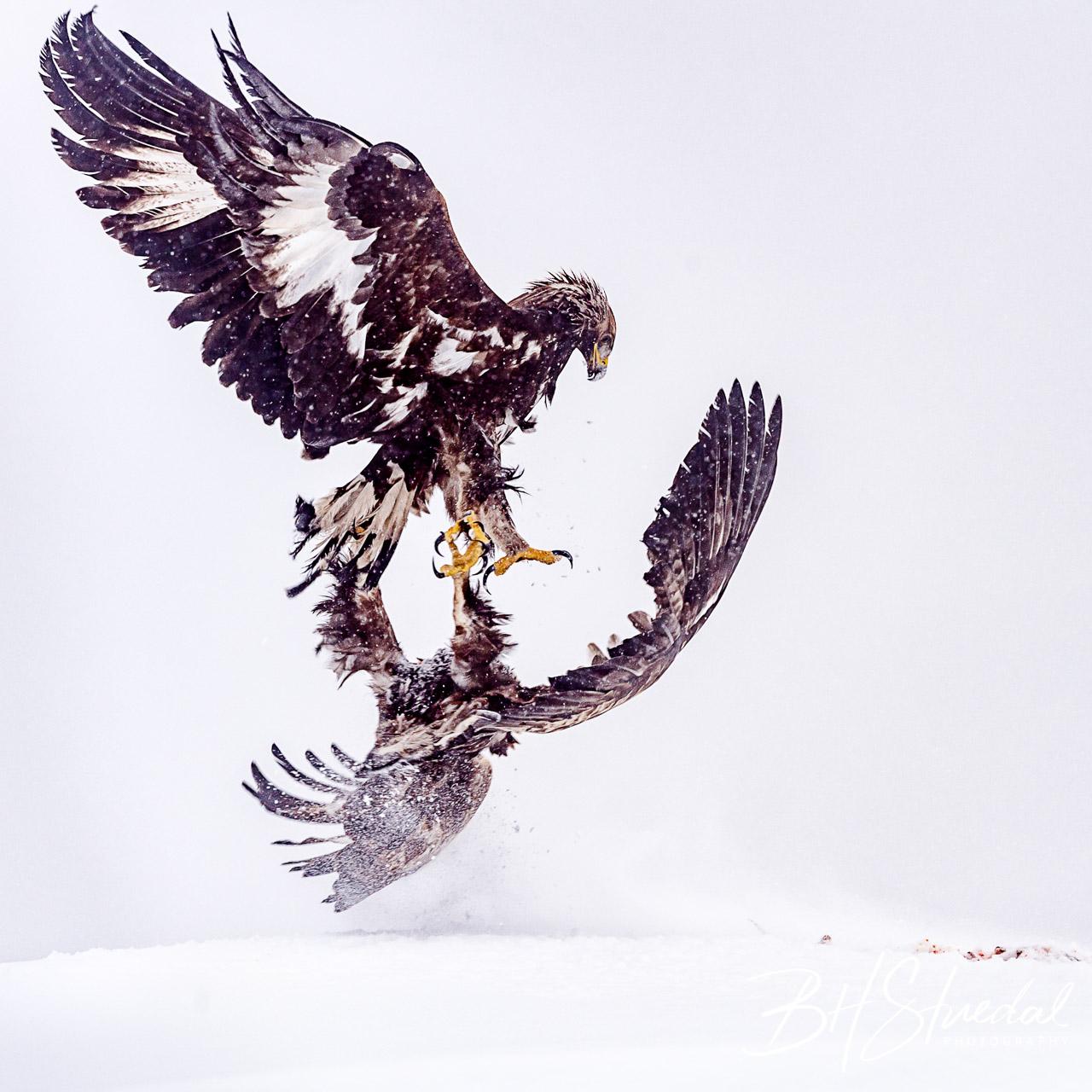 Eagle fight 2